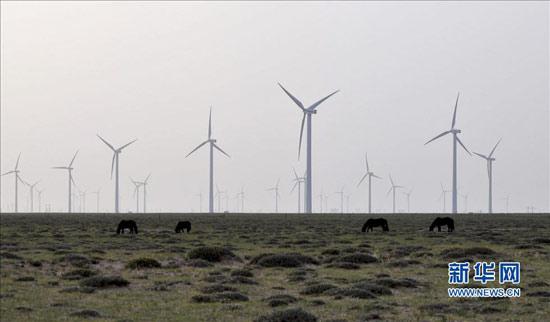 一群马在内蒙古乌拉特中旗鲁能风电场的草地上吃草